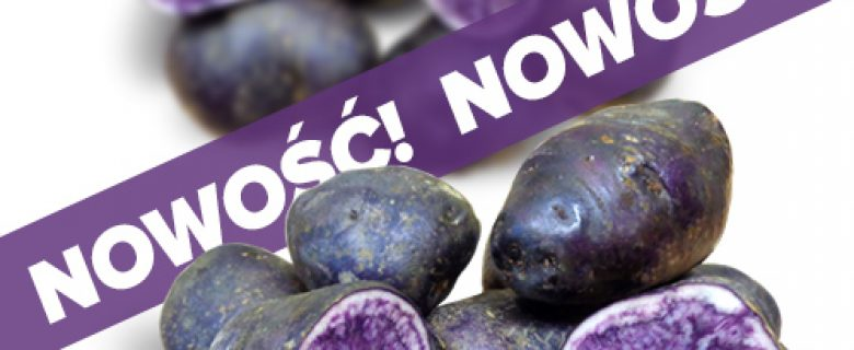 Ziemniaki Fioletowe Blue Congo